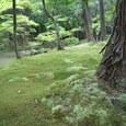 28.西芳寺(苔寺)
